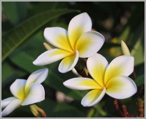 flower2_8_sm